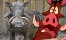 Lion King Fans Are Learning The Hard Way That Pumbaa Wouldn't Be Friendly In This Viral Video