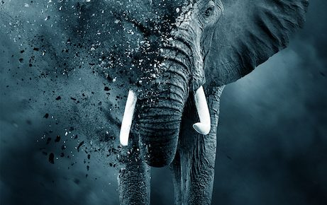The Ivory Game Trailer Makes A High-Stakes Case Against Poaching