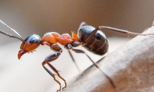 1 Million Cannibal Ants Have Now Escaped Their Soviet Nuclear Bunker Prison