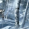 Could These Be Real Assassin's Creed III Screenshots?
