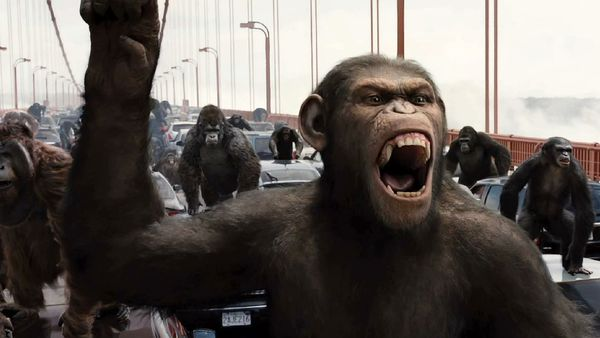 PETA Wants Apes Out Of Hollywood, Slams The Wolf Of Wall Street