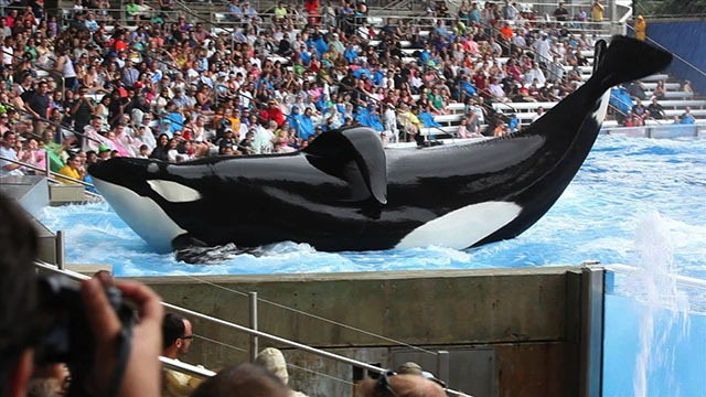 Blackfish 10 Noteworthy Omissions From The 2014 Academy Award Nominations