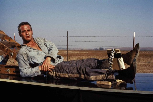 Cool Hand Luke 10 Essential Movies From The 1960s