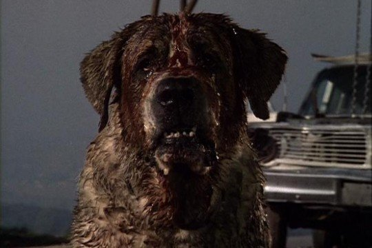 Cujo 540x360 Cujo Remake Claws Back Into Development