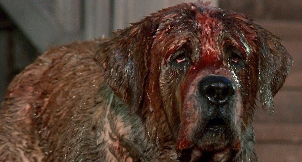 Cujo Remake Takes A Discouraging Turn For The Bizarre