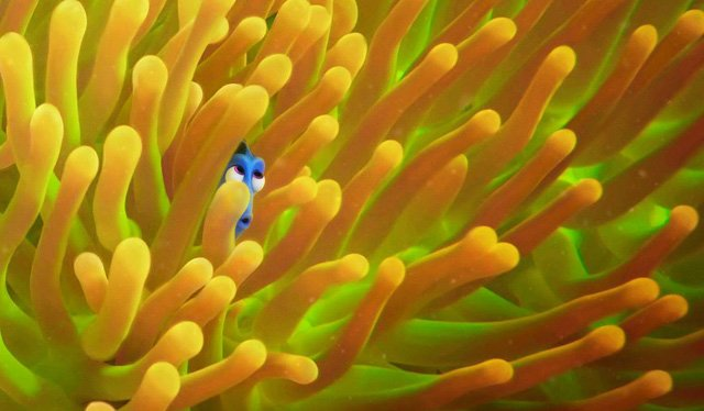 Pixar's Forgetful Fish Is Lost In The Deep Blue In New Posters For Finding Dory
