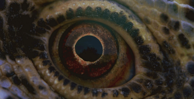 First Images For Terrence Malick's Voyage Of Time Tease The Circle Of Life