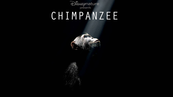 New Trailer For Chimpanzee, A Documentary From Disney Nature
