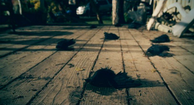 dead-birds-fall-for-death-do-us-part-movie