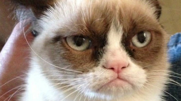 grumpycat Internet Sensation Grumpy Cat To Star In Her Own Movie